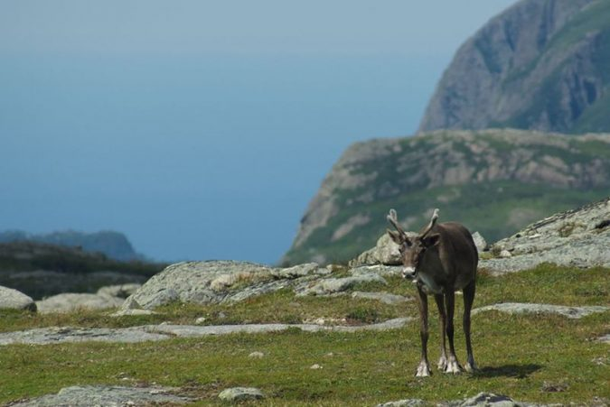 Gros-Morne-National-Park-Canada-4-675x451 5 Hidden Gems to Visit in Canada