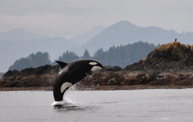Haida-Gwaii-island-Canada-whales-and-dolphins-full_breach_Parks_Canada_C.Bergman-675x427 5 Hidden Gems to Visit in Canada