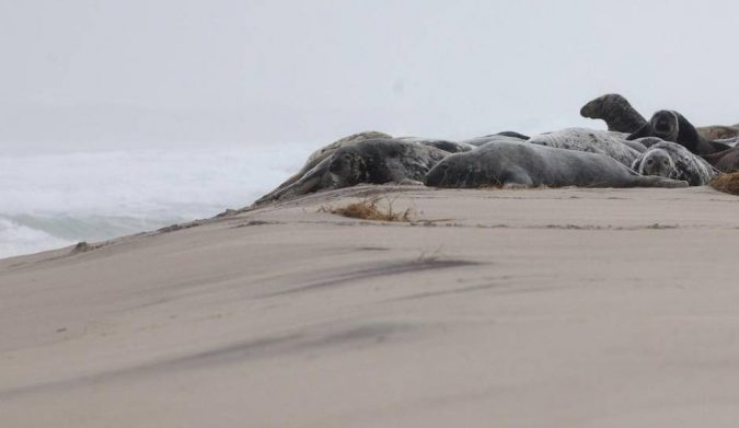 Sable-Island-National-Park-Reserve-Canada-3-675x391 5 Hidden Gems to Visit in Canada