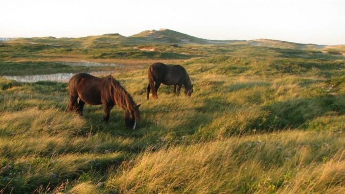 Sable-Island-National-Park-Reserve-Canada-4-675x380 5 Hidden Gems to Visit in Canada