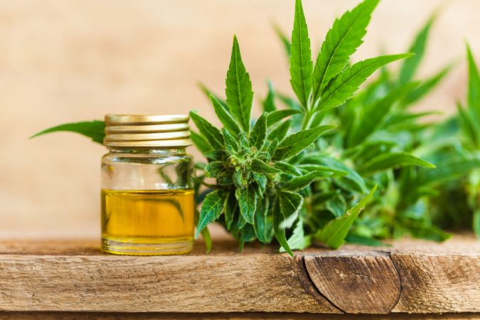 Cannabis-oil-for-dogs-2-675x450 10 Reasons Why Your Dog Needs Cannabis Oil