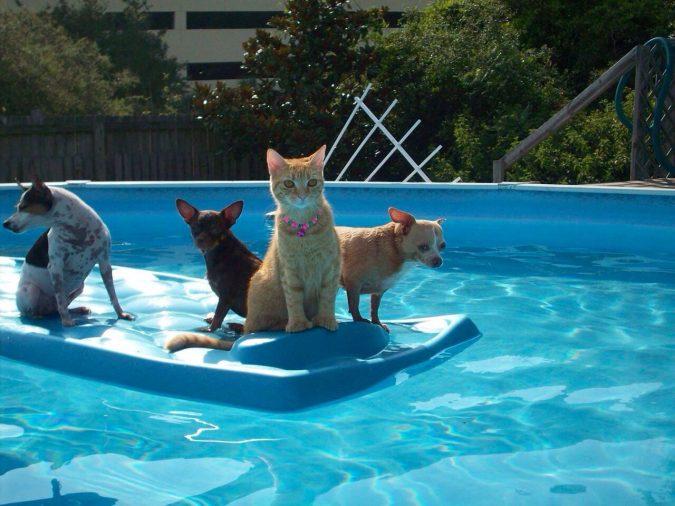 Keeping-Animals-Away-675x506 Top 15 Must-Follow Pool Maintenance Tips