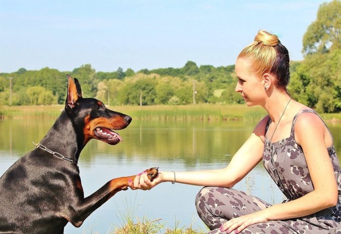 dog-and-lady-holdong-hands-675x463 10 Reasons Why Your Dog Needs Cannabis Oil