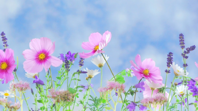 Photo of Creating an Environmentally Friendly Garden through Xeriscaping