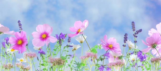 flowers-675x299 Creating an Environmentally Friendly Garden through Xeriscaping