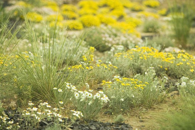intensive-gardening-plan-water-wise-garden-675x450 Creating an Environmentally Friendly Garden through Xeriscaping