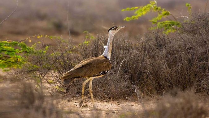 Desert-National-Park-india-675x383 6 Top Reasons to Visit India