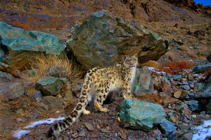 Hemis-National-Park-india-675x449 6 Top Reasons to Visit India
