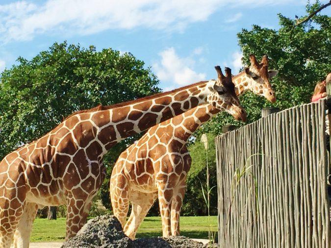Miami-Zoo-675x506 Top 6 Outdoor Activities Miami Has to Offer