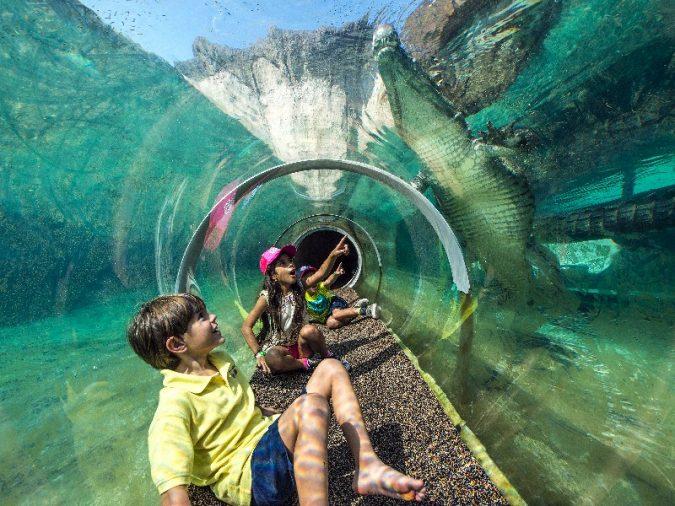 Zoo-Miami-1-675x506 Top 6 Outdoor Activities Miami Has to Offer