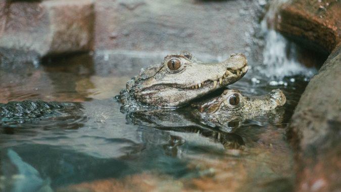 baby-alligators-675x380 Top 6 Outdoor Activities Miami Has to Offer