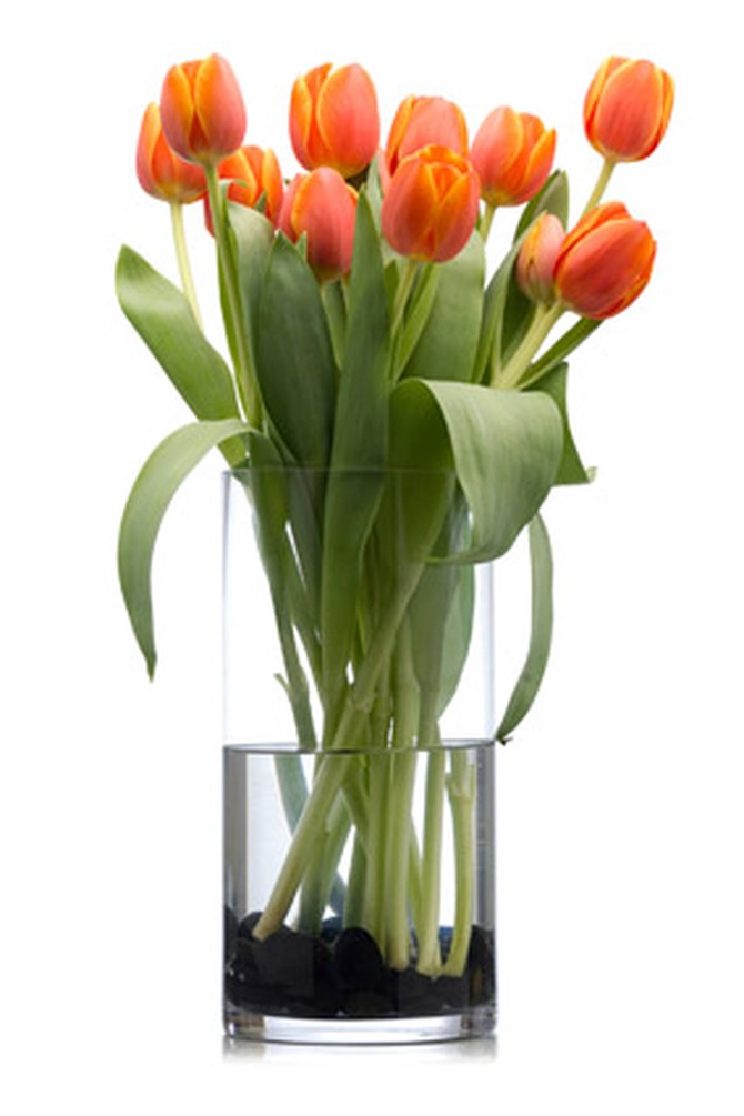 cut-flowers-tulips-vase How to Make Cut Flowers Last Longer?