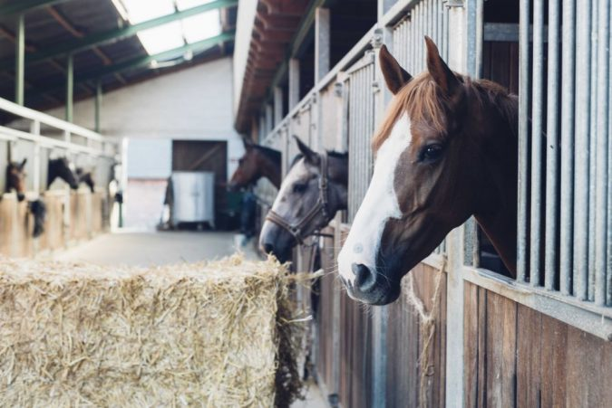 horse-stable-2-675x451 3 Awesome Tips You Need for Your Dream Horse Stable