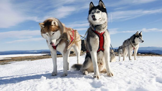 travel-Dogsledding-2-675x380 6 Types of Outdoor Travel Adventures to Experience