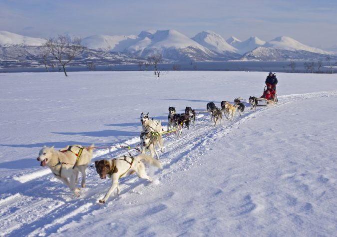 travel-Dogsledding-675x475 6 Types of Outdoor Travel Adventures to Experience