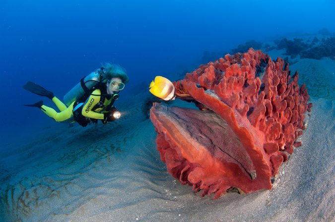 travel-Snorkeling-675x448 6 Types of Outdoor Travel Adventures to Experience
