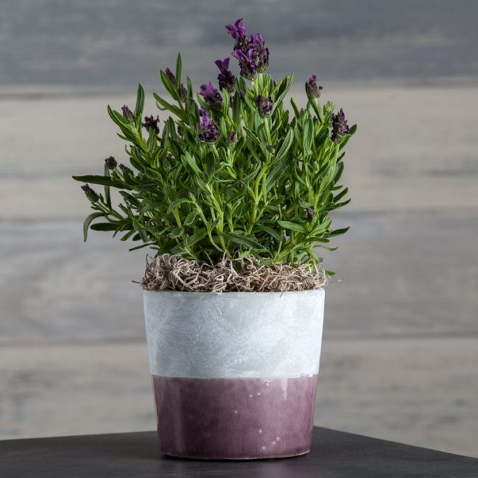 Aromatic-lavender-in-a-purple-Circa-pot-675x675 Top 15 Creative Mother's Day Gift Ideas