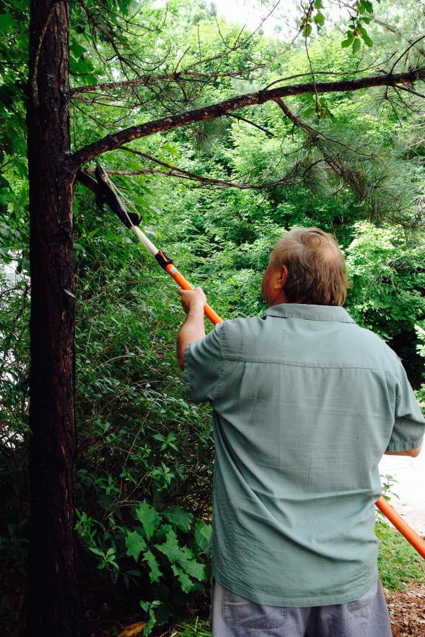 Check-the-Condition-of-Diseased-Trees Home Preparation for The Upcoming Monsoon Season