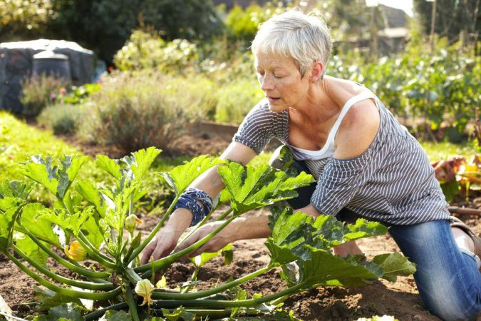 garden-focal-points-675x450 Yard Care Tips You Don't Want to Miss