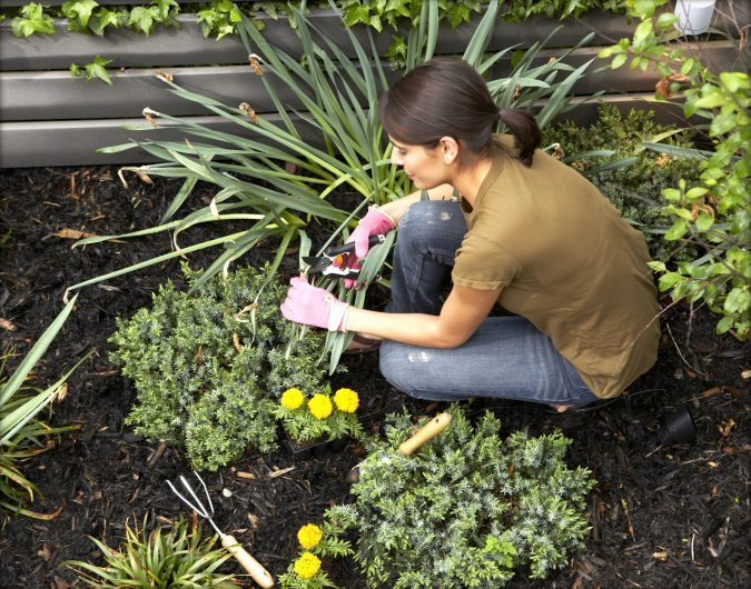 low-maintenance-landscaping-home-garden-2-e1554538853580-675x530 5 Landscaping Trends to Consider
