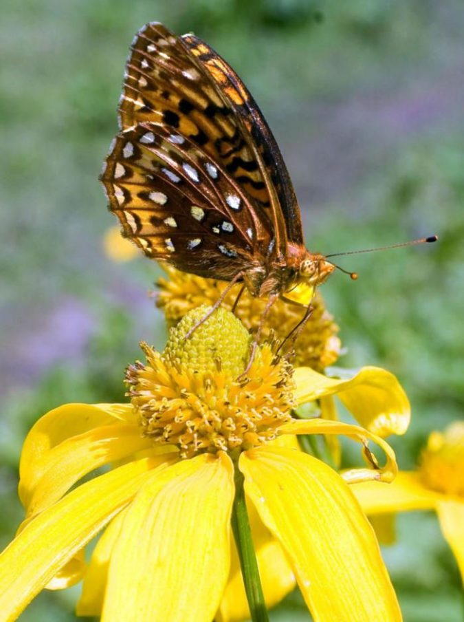 pollinator-garden-675x904 5 Landscaping Trends to Consider
