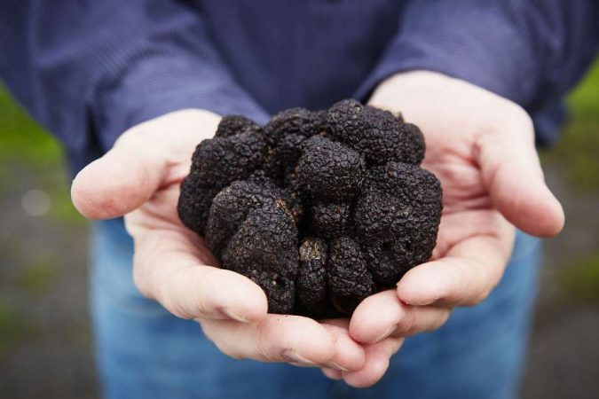 Black-Truffles-675x450 10 Most Luxury Dishes Only for Billionaires