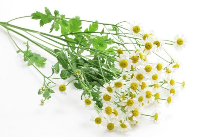 Feverfew-Leaves-and-Flowers-675x450 8 Natural Supplements You Should Add to Your Health Regimen
