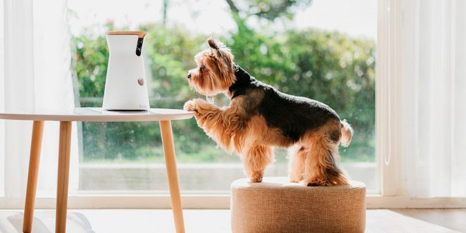Furbo-Dog-Camera.-675x338 5 Smart Home Items That Can Make Your Life Easier