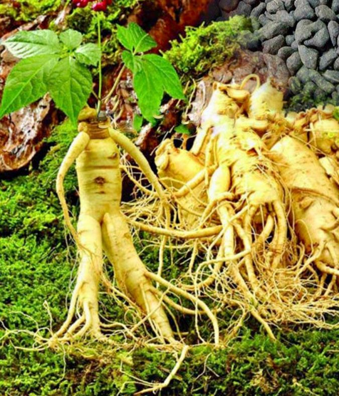 Ginseng-675x788 8 Natural Supplements You Should Add to Your Health Regimen