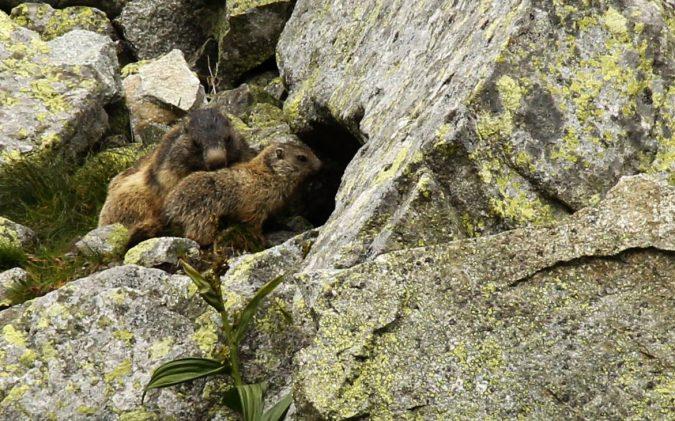 High-Tatras-Solovakia-wildlife-675x421 Top 5 European Holiday Destinations in 2020