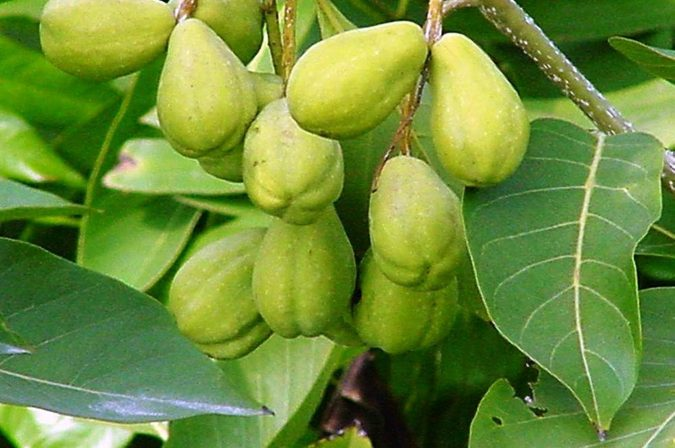Terminalia-Chebula-1-675x448 8 Natural Supplements You Should Add to Your Health Regimen