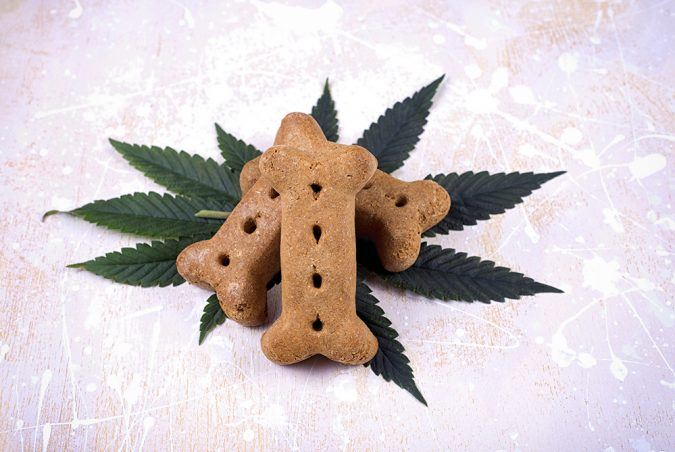 CBD-Pet-Products.-675x452 Top 15 Unusual Products of CBD That Worth Trying
