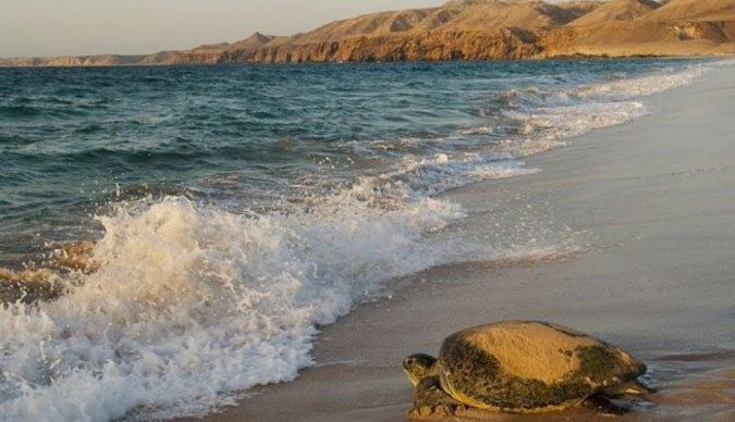 Ras-al-Jinz-Turtle-Reserve-675x388 How to Prepare a Road Trip in Oman
