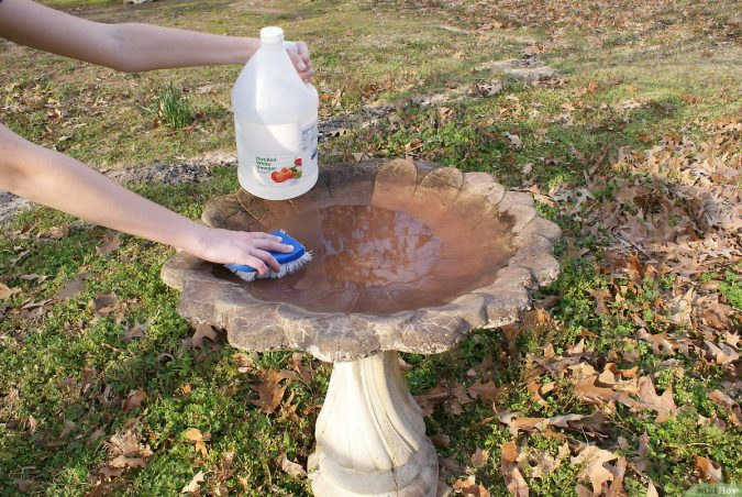 Cleaning-Birdbaths-675x452 Best 15 Natural Remedies for Getting Rid of Pests in Your House