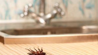 Photo of Best 15 Natural Remedies for Getting Rid of Pests in Your House