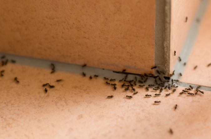 ants-675x445 Best 15 Natural Remedies for Getting Rid of Pests in Your House