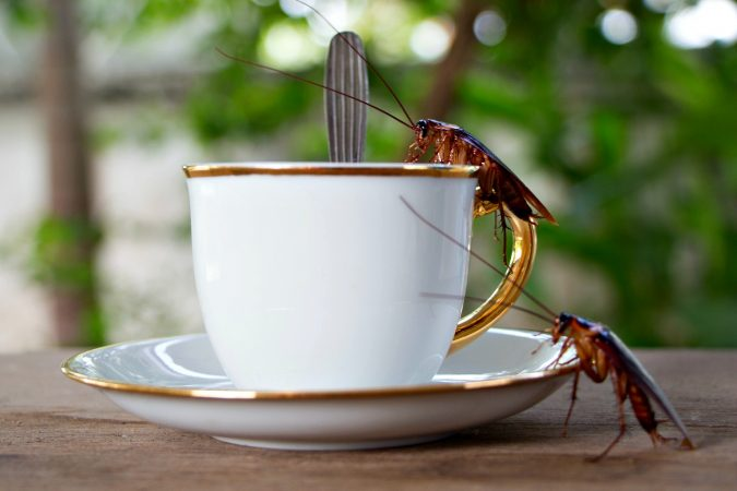 cockroaches-and-coffee-675x450 Best 15 Natural Remedies for Getting Rid of Pests in Your House