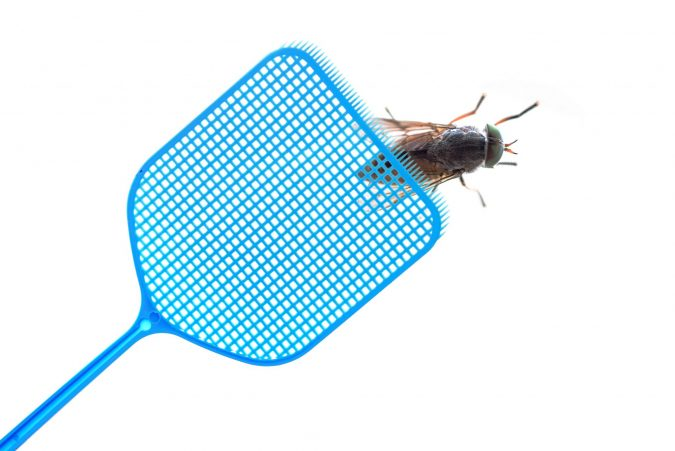 fight-roaches-675x451 Best 15 Natural Remedies for Getting Rid of Pests in Your House