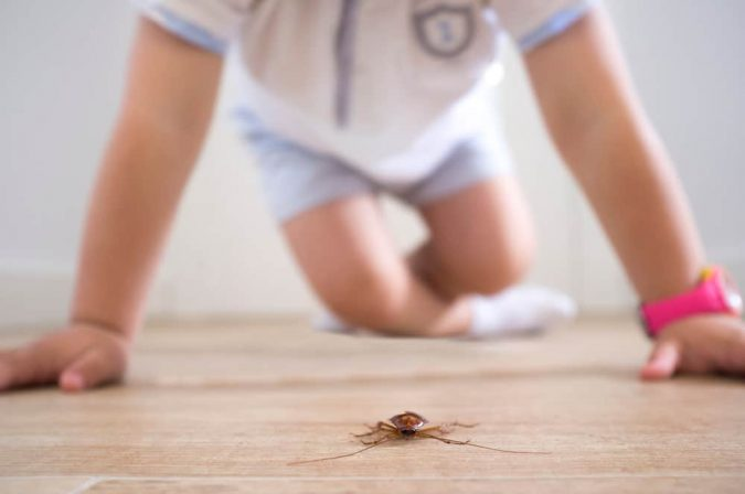 home-pests-675x448 Best 15 Natural Remedies for Getting Rid of Pests in Your House