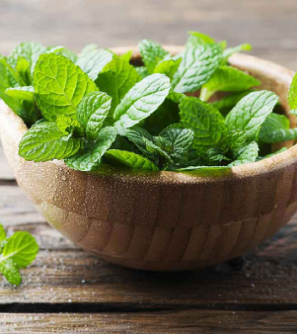 mint-leaves-1 Best 15 Natural Remedies for Getting Rid of Pests in Your House
