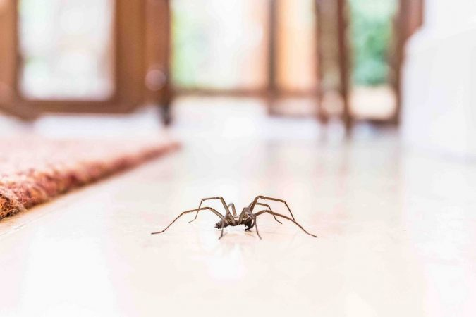 pest-675x450 Best 15 Natural Remedies for Getting Rid of Pests in Your House