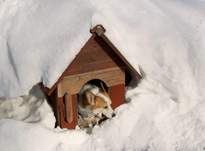 Pet-house-675x498 Top 10 Latest products to Enjoy Your Next Winter