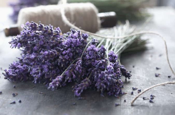 storing-clothes-with-lavender-675x444 Top 7 Tips for Storing Your Summer Items During Winter