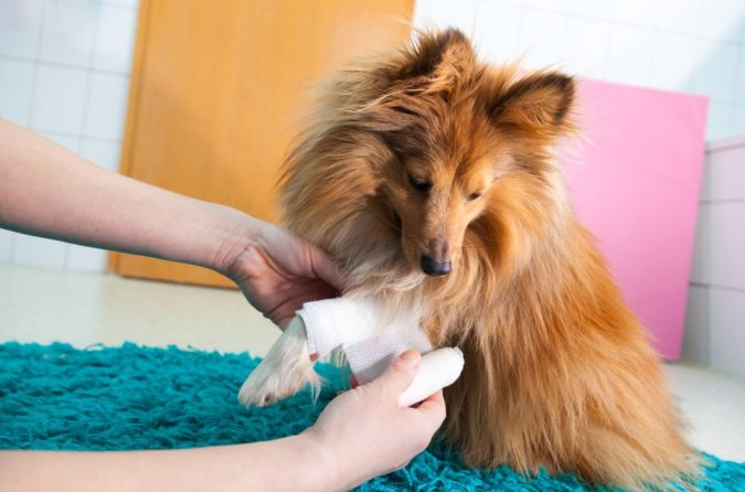 First-aid-for-dog-675x446 How to Take Care of Your Pet's Health in Emergency Situations