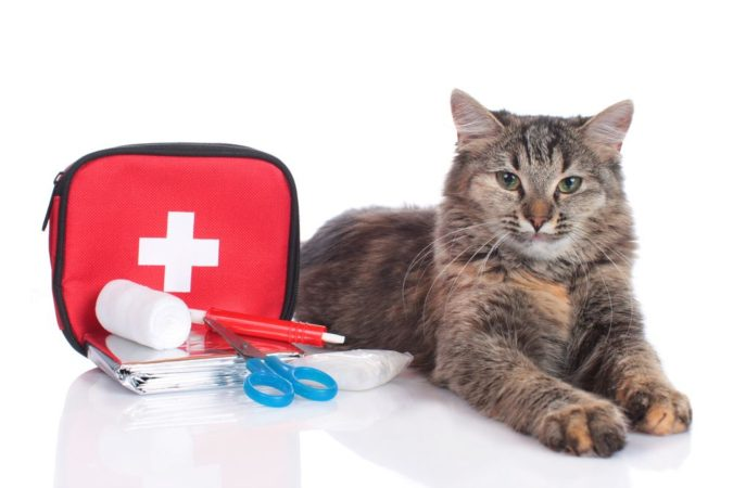 first-aid-kit-for-your-pets-675x450 How to Take Care of Your Pet's Health in Emergency Situations