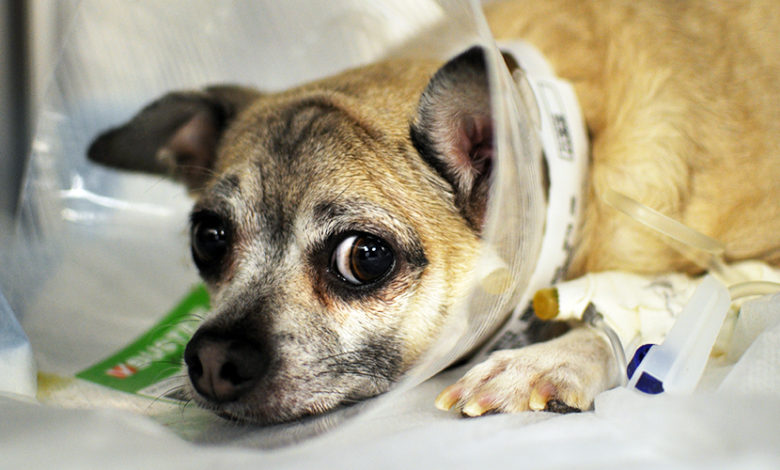 Photo of How to Take Care of Your Pet's Health in Emergency Situations