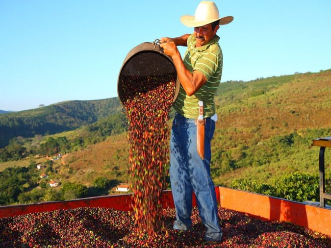 Brazil-coffee-675x506 Top 10 Coffee Producing Countries in the World