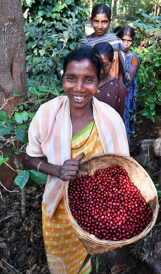 Indian-Coffee-1 Top 10 Coffee Producing Countries in the World