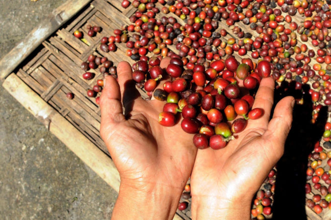 Indonesia-coffee-675x450 Top 10 Coffee Producing Countries in the World