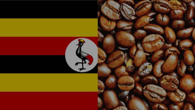 Uganda-coffee-675x380 Top 10 Coffee Producing Countries in the World